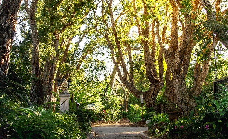 inside-the-icon-san-diego-botanic-garden-d60980e3