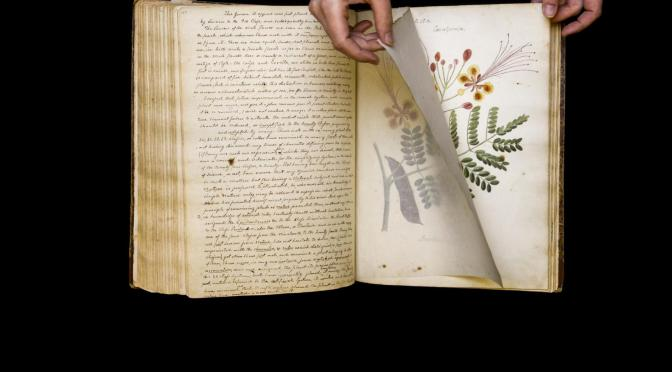 'Lost' book of Cuban botany drawings rediscovered after 190 years