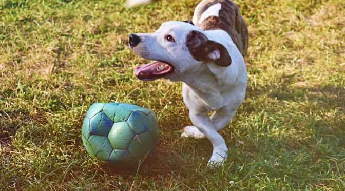 An Interloping Dog Entered a Soccer Game and Proved He's the Real Star of the Sport — TIME