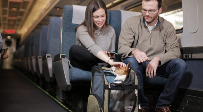 Amtrak goes all in on dogs (and pet fares add up) | WTOP