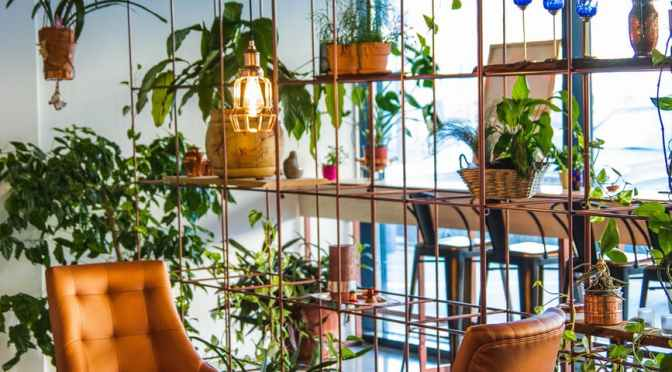 Click & Grow 25 Indoor Garden Brings Growing Into Your Kitchen