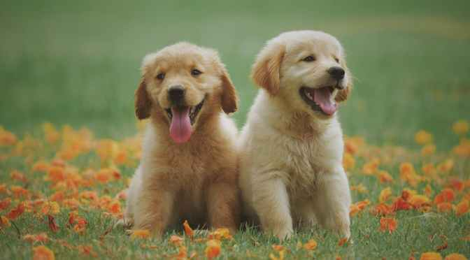 It's National Dog Day! Here Are Some Of NPR's Pups : NPR