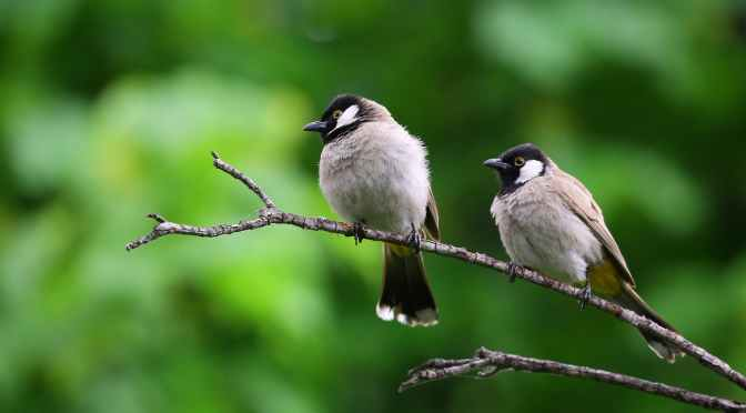 Cornell's Merlin app can identify birds by sight and sound   Popular Science