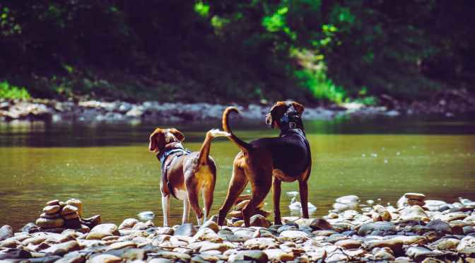 National Dog Day 2021: Benefits of having a dog – CNN