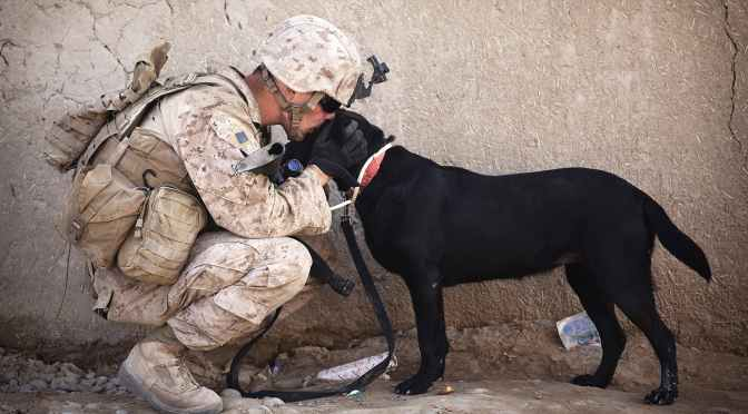 Veterans Can Train, Adopt Service Dogs Under New PAWS Law : NPR