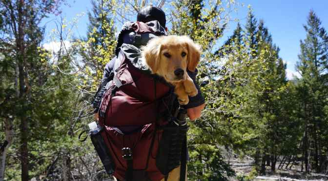 National Park Service to Hikers: Leave Dogs at Home – Sunset Magazine